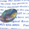 opals,mixed color opals,opal